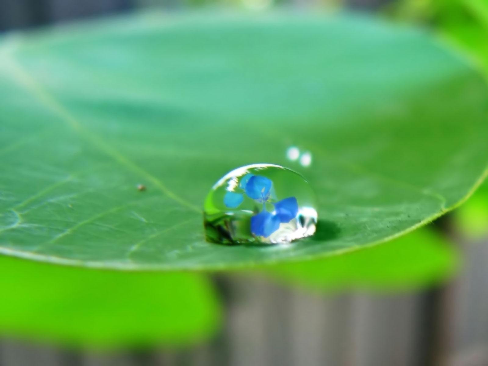 ws_Water_drop_on_leaf_1600x1200